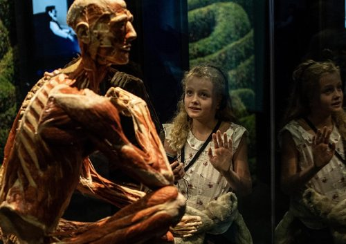 Celebrate with Body Worlds header image