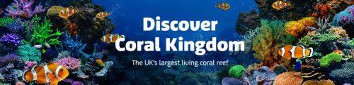 Discover Coral Kingdom at SEA LIFE London header image
