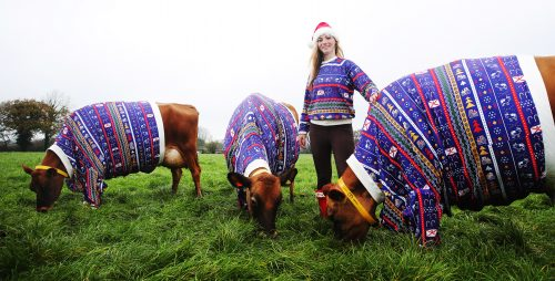 Happy National Xmas Jumper Day header image